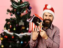 Party and christmas concept. Dog year winter holiday and xmas. Santa man with beard and happy face holding pet. New year of dog, guy holding puppy. Santa claus royalty free stock photos