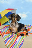 Party Dachshund on the Beach Stock Photos