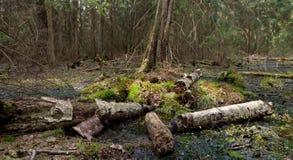 Party declined stump of broken birch tree Stock Photo