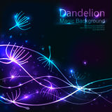 Party design template with Dandelions. Vector illustration Royalty Free Stock Photo