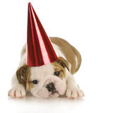 Party dog Royalty Free Stock Images