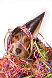 Party dog. Dog with pointy hat is ready for a party Royalty Free Stock Photo