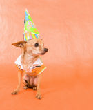Party dog Royalty Free Stock Image