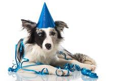 Party dog Royalty Free Stock Photo