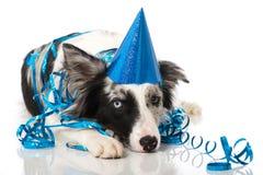 Party dog Stock Image