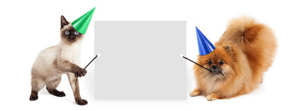 Party Dog and Cat Holding Up Banner Stock Photography