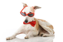 Party dog Stock Photography