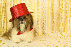 Party Dog in a Red Top Hat Stock Photography