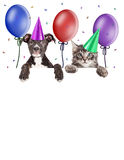 Party Kitten and Puppy Hanging Over Blank Banner. Puppy and kitten hanging over blank banner wearing party hats with balloons and confetti Royalty Free Stock Images