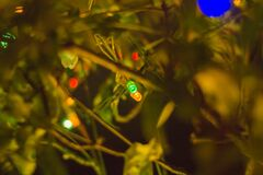 Green, Yellow, red small led  L.E.D , party lights on a tree