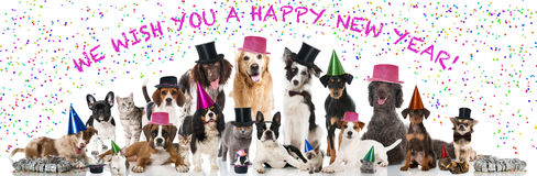 Party Pets Stock Images