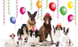 Party pets Stock Photography