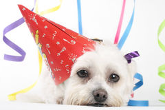 Party Pooch Stock Images