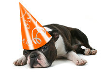 Party pooper Royalty Free Stock Image
