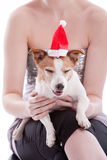 Party pooper. Cute little Jack Russel terrier with christmas hat Stock Photography