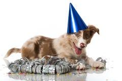 Party Puppy Stock Photos