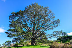 Party tree in Hobbiton, Matamata, New Zealand Royalty Free Stock Photos
