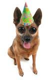 Partyhund Stockfoto
