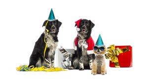 Partying dos cães foto de stock