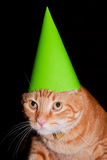 Partyjny kot Zdjęcia Royalty Free