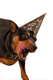 Partytier Lizenzfreie Stockfotos