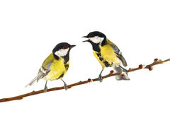 Parus Royalty Free Stock Photography