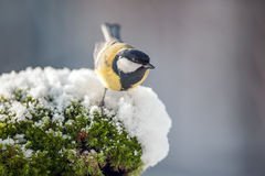Parus Royalty Free Stock Image