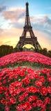 Paryż, kwiaty i wieża eifla, Fotografia Royalty Free