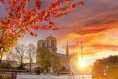 Paryż, Notre Damae katedra z kwitnącym treeagainst kolorowym wschodem słońca w Francja Fotografia Stock