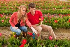 pary holenderscy poly kwiatu potomstwa obraz royalty free