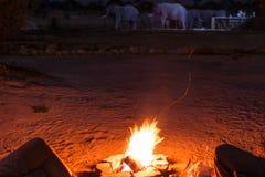 Pary obsiadanie przy palenie obozu ogieniem w nocy Obozować w pustyni z dzikimi słoniami w tle Lato przygody i e Zdjęcia Stock