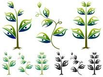 Pary roślina Obrazy Stock