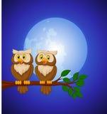 Pary sowy kreskówka przy nocą Obrazy Royalty Free
