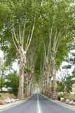 pasów ruchów drzewa Obraz Stock