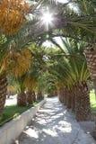 pasów ruchów palmtrees Fotografia Royalty Free