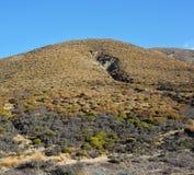 País alto de Canterbury atapetado em plantas nativas, em arbustos e em Turquia Fotografia de Stock