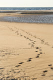 Pas au rivage de la plage Photo stock