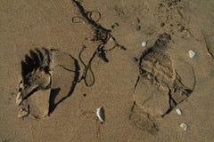 Pas d'animal et d'enfant sur la plage Photographie stock libre de droits