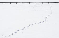 Pas dans la neige Photo libre de droits