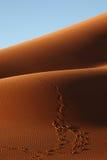 Pas dans le sable Photos libres de droits