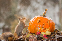 Pas plus de Halloween Image stock