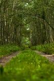 Pas ruchu otaczający gęstym lasem fotografia royalty free