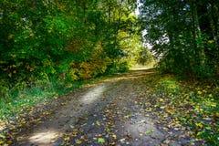 Pas ruchu w jesieni drewnie Zdjęcia Stock