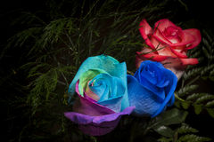 Pas simplement roses ordinaires Images stock