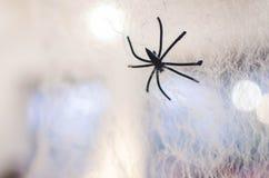 Pas une vraie araignée sur le Web images stock