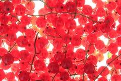 Pasa roja Fotografía de archivo libre de regalías