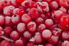 Pasa roja DSC_0645 de las bayas congeladas Foto de archivo