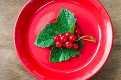 Pasa roja orgánica madura fresca en placa Fotos de archivo libres de regalías