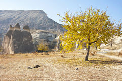 Pasabag. The Pasabag (Monks Valley) with Fairy Chimney rock formations in Cappadocia at sunny autumn day Royalty Free Stock Photos