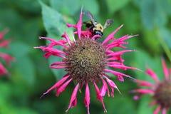 Pasado del polen Imagen de archivo